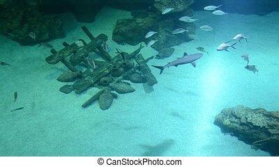 sharks in deep blue sea