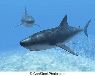 sharks  in the blue water
