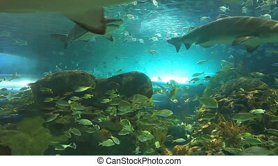 Sharks swim among large colorful schools of tropical fish