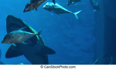 Sharks swim in a large aquarium, predators and small fish.