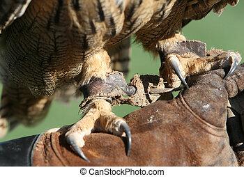 Sharp claws on a royal owl
