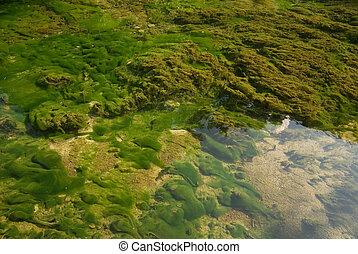 sharp lake bottom with alge