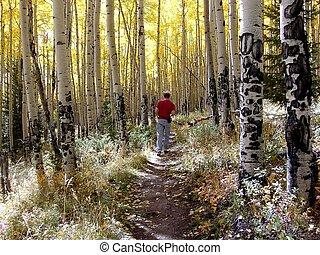 Shavano Fall Hike