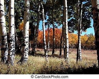 Shavano Impressions - Impressionistic rendering of autumn...