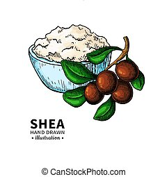 Shea butter vector drawing. Isolated illustration of nuts, ...