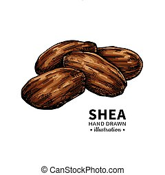 Shea butter vector drawing. Isolated illustration of nuts...