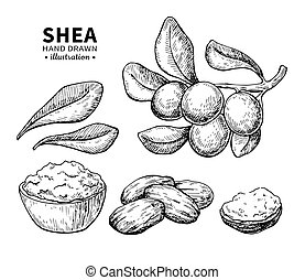 Shea butter vector drawing. Isolated vintage illustration of berry, nuts, branch. Organic essential oil engraved style sketch. Beauty and spa, cosmetic ingredient. Great for label, poster, flyer, packaging design.
