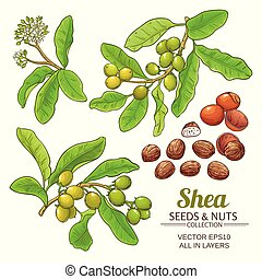 shea vector set - shea branches vector set on white ...
