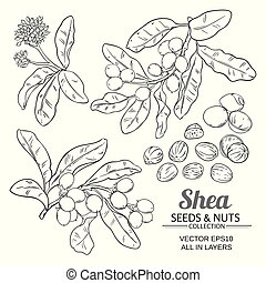 shea branches vector set on white background