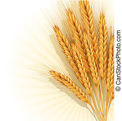 sheaf of golden wheat ears - vector background with a sheaf...