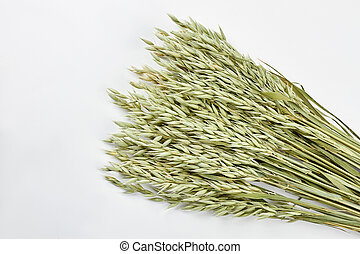 Sheaf of oat ears on white background.