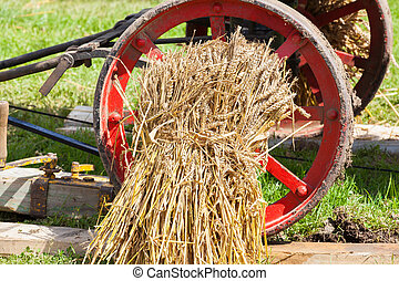 sheaf of wheat harvested by ancient tradition
