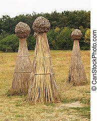 Sheafs of hay