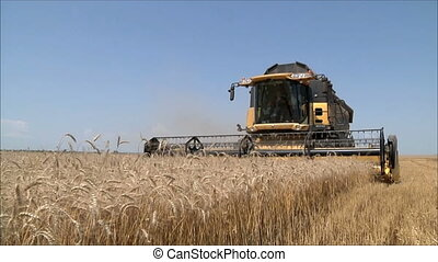 shearers, 2, blé, récolte