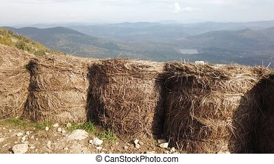 Sheaves of hay after harvesting rice in field