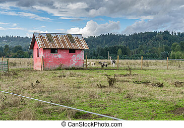 Shed And Animals 2
