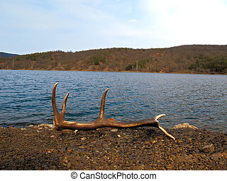 horn - shed horn on beach of lake