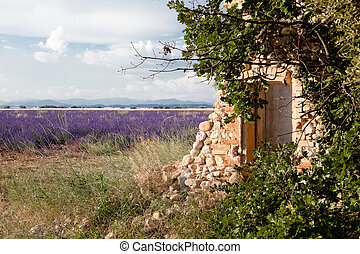 Shed in lavender