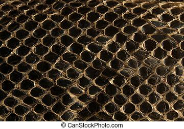 Shed snake skin pattern background over black