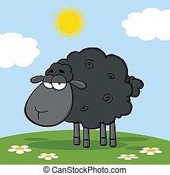 sheep, かわいい, 黒, 牧草地
