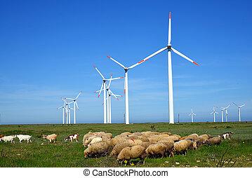 sheep, タービン, に対して, ラム, フィールド, 風