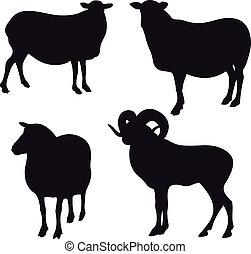 sheep, ベクトル