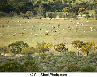 sheep, 动物, -