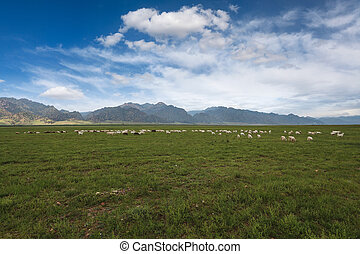 sheep, 青い空, 群れ, 下に, 牧草地