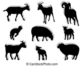 Sheep and goats in silhouette in different poses