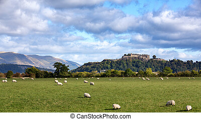 Sheep and Stirling Castle - A view of sheep grazing with...