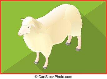 sheep, apartamento, isometric, vetorial, 3d