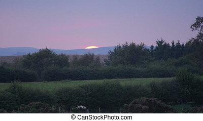 Sheep at sunset in Welsh landscape