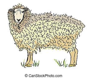 sheep, ausztrál, vektor