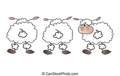 sheep, bianco, group.