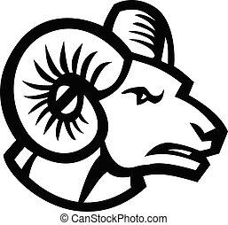 sheep, blanco, negro, vista, carnero, cabeza del espolón, ...