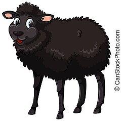 sheep, branca, experiência preta
