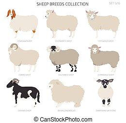 Sheep breeds collection 5. Farm animals set. Flat design