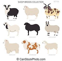 Sheep breeds collection 9. Farm animals set. Flat design