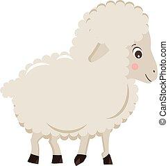 sheep, carino, poco, isolato, illustrazione, fondo, vettore, bianco, cartone animato