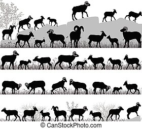 sheep, carnero