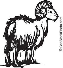 sheep, chifre grande