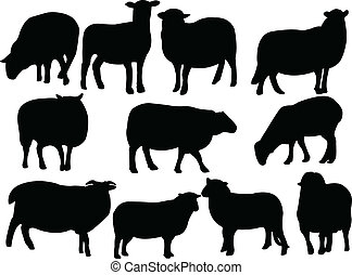 Sheep collection