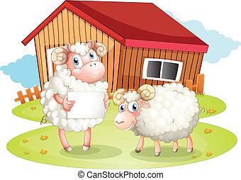 sheep, costas, segurando, signage, vazio, celeiro