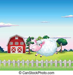 sheep, dentro, indietro, recinto, granaio