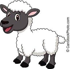 sheep, divertente, proposta, cartone animato, isolato