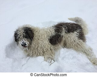 Sheep dog sitting in the snow