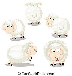 sheep, engraçado, illustrator, caricatura