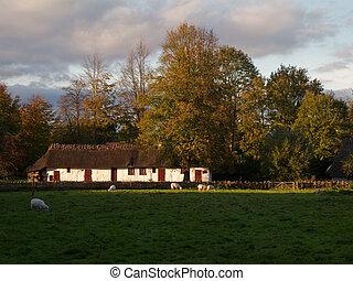 sheep, förgrund, medeltida, lantgård logera, höst