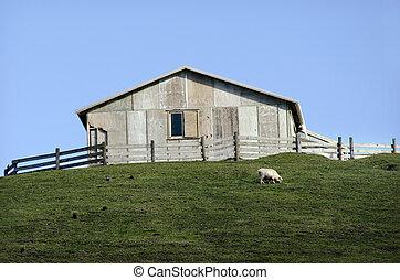 Sheep farm in New Zealand