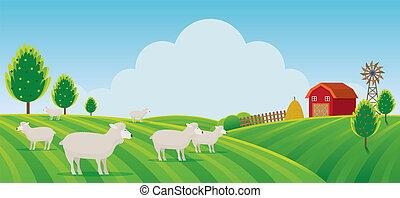 Sheep Farm on Hill Landscape Background